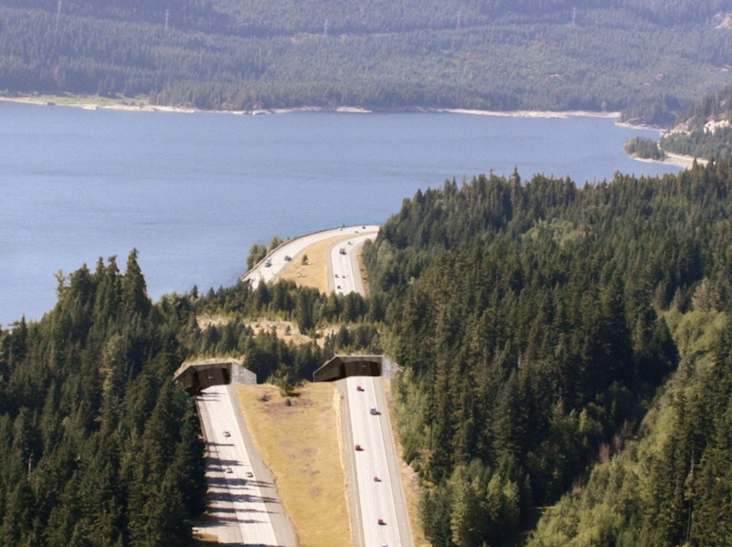 An aerial view of a divided highway with two lanes in each direction. The highway borders a lake on the left and a forest on the right. The traffic is routed through two tunnels beneath an overpass constructed of soil, grass, and trees, for animals to use to safely access the lake habitat.