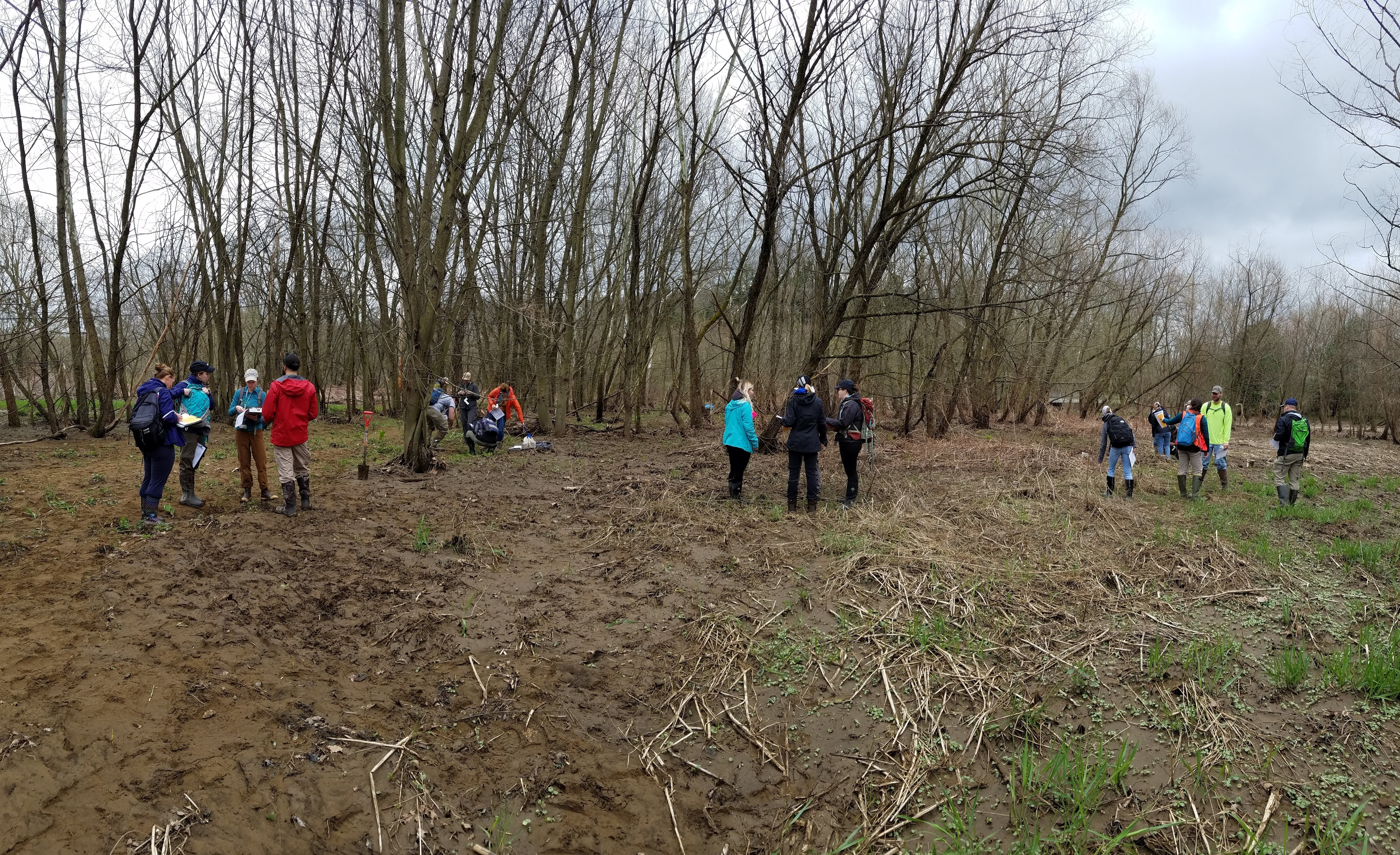Five groups of four people taking notes are scattered throughout a muddy clearing with a stand of bare trees in the background.